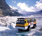 Columbia Icefield tours